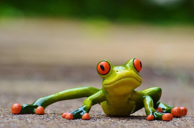 frog-927764_640
